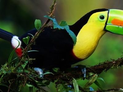 Gran viaje de Singles a Costa Rica